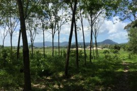 Land for sale in Phuket