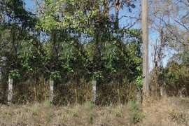 Land for sale in Khai Bok Wan, Mueang Nong Khai