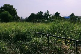 Land for sale in Ban Mai, Pathum Thani