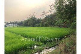 Land for sale in San Sai, Fang