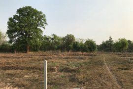 Land for sale in Sam Phrao, Udon Thani