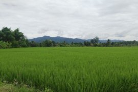 Land for sale in Ban Kat, Chiang Mai